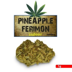 Pineapple Ferimon